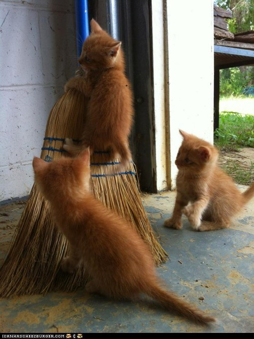 brooms,broomstick,Cats,climbing,cyoot kitteh of teh day,kitten,orange,sweeping