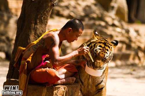 animals,food,g rated,lunch,monk,tiger,win