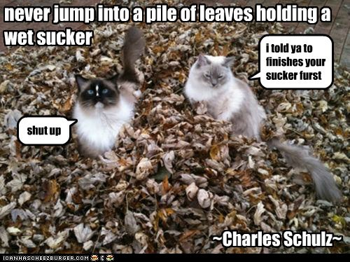 never jump into a pile of leaves holding a wet sucker i told ya to finishes your sucker furst shut up ~Charles Schulz~