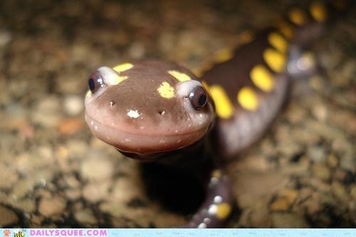amphibian salamander slimy smile spots - 6383650816