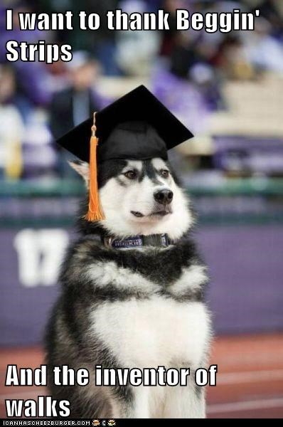 beggin strips,dogs,graduation,hat,husky,malamute,thank you,walks