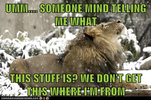 asking cold confused lion snow turn it off unfamiliar what is this - 6384638464