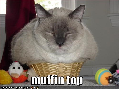Hall of Fame lolcats muffin muffintop - 638464768