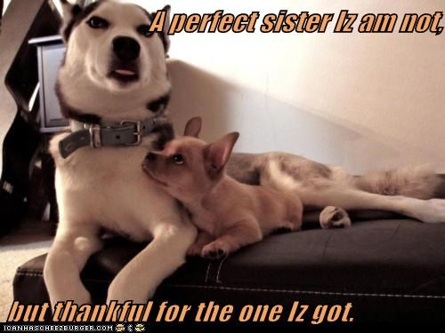 captions cuddles dogs family husky love sister - 6384801536