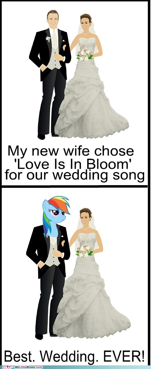 20 Percent Coole 20 Percent Cooler love is in bloom married Music twenty percent cooler wedding - 6384936192
