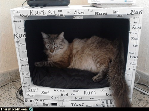 cat cat bed kuri television TV