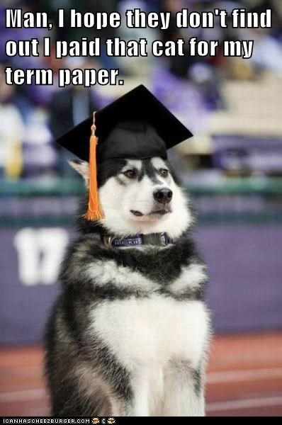 cat,Cheaters Never Prosper,dogs,graduated,hat,huskie,malamute