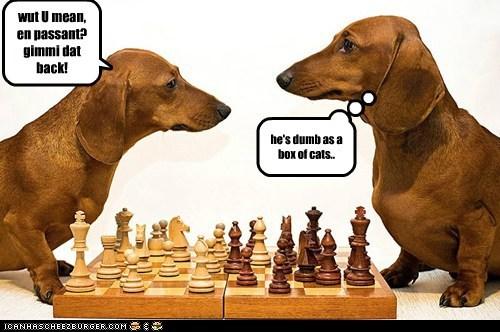 chess dachshund dogs dummy game - 6385175296