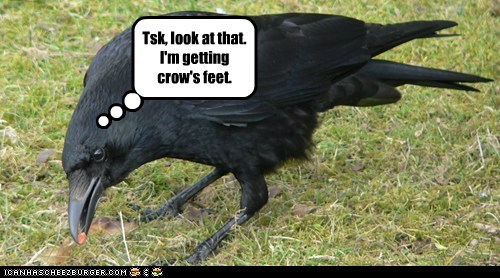 crow,crows-feet,getting old,look at that,pun,tsk