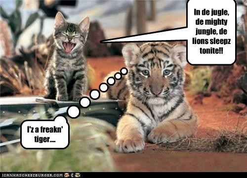 annoying,baby animals,cat,cub,jungle,kitten,song,tiger
