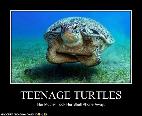 arms crossed,cell phone,puns,resentment,shell,teenagers,turtles