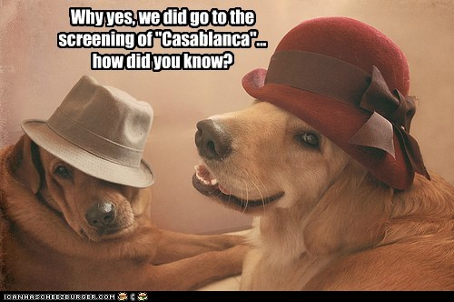 casablanca costumed dogs hats labrador Movie - 6385773056