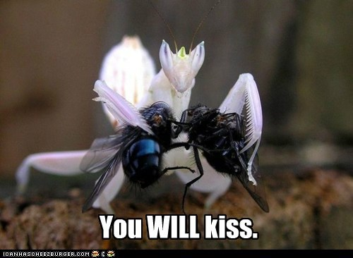 captions flies holding insistence now kiss praying mantis - 6385864704