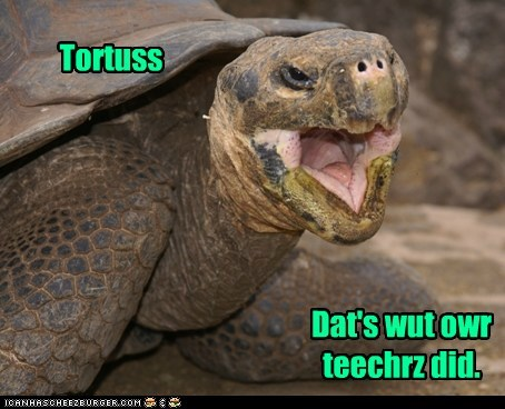 accents old man puns snow stories tortoise - 6385899264