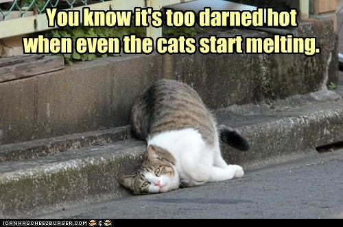You know it's too darned hot when even the cats start melting.