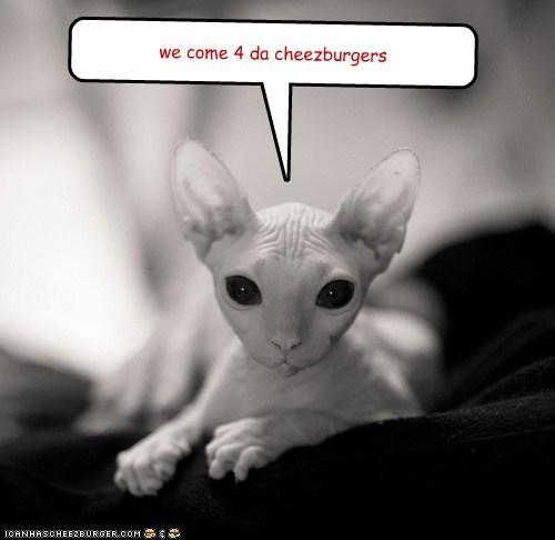 Cheezburger Image 6388196864