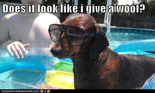 best of the week dachshund Deal With It dogs Hall of Fame sunglasses swimming pool