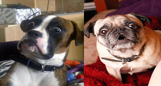 pictures of dog expressions that are very emphatic and convey the emotion across the room