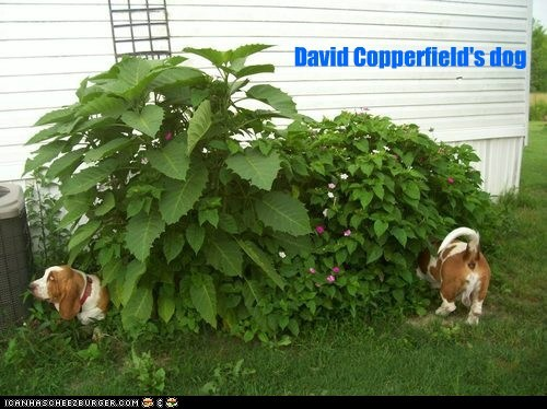 basset hounds,captions,david copperfield,dogs,illusion,magic,plant