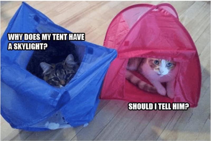 FAILS hilarious memecats cute lol funny cat fails - 6389509