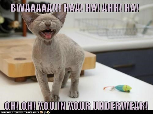 gross laugh lolcat naked nude sexy underwear - 6389531904