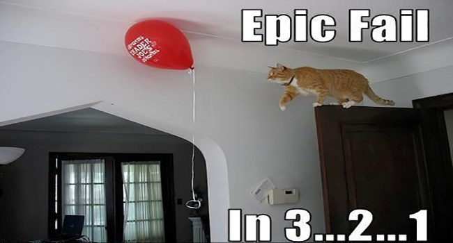 memes of cat fails that are meow-rific
