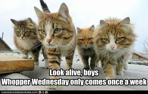 Look alive, boys Whopper Wednesday only comes once a week