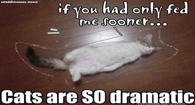 lolcats hilarious lolz fail meme funny memes Memes lol hilarious memes Cats funny cat memes - 6390277