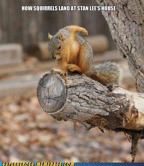 animals Spider-Man squirrel stan lee Super-Lols - 6390569728