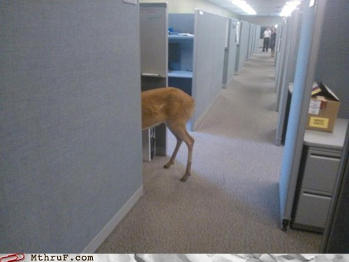 deer,deer in the office