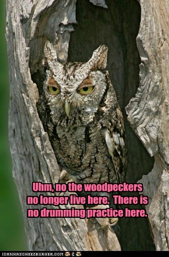 Uhm, no the woodpeckers no longer live here. There is no drumming practice here.