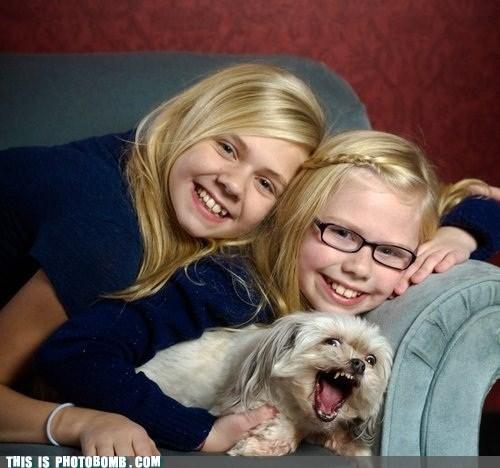 animal Animal Bomb best of week dogs family photo photobomb - 6390876160