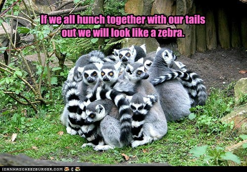 disguise,escape,hunch,lemurs,plan,zebra