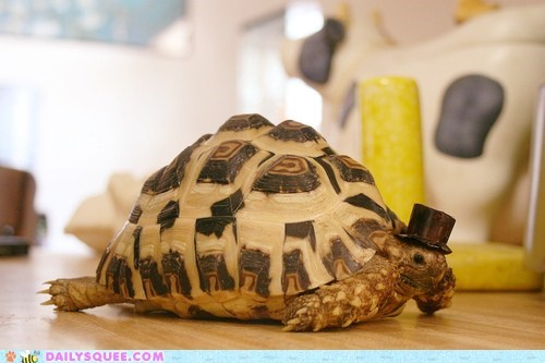 fancy gentlemen squee top hat tortoise turtle - 6390974976