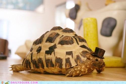 fancy gentlemen squee top hat tortoise turtle - 6390974976