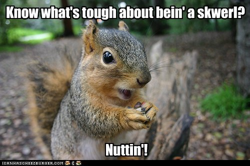 nothing,nuts,nutting,puns,squirrel,tough,try it