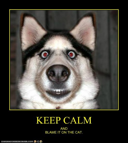 best of the week blame the cat demotivational dogs Hall of Fame huskie keep calm and - 6391083264