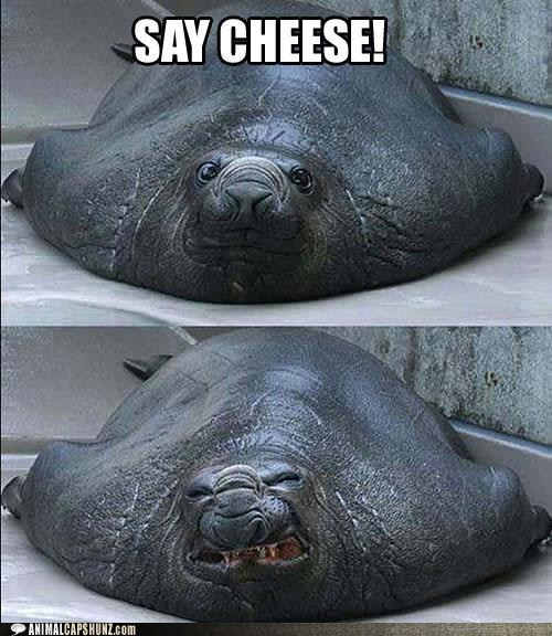 best of the week,derp,fat,Hall of Fame,say cheese,seal,smile,sneeze,taking pictures