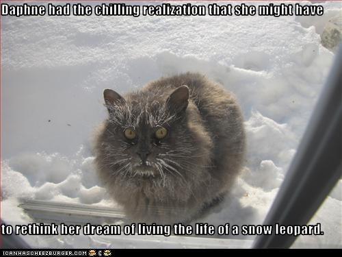 classic classics cold freezing snow snow leopard winter - 6391180288