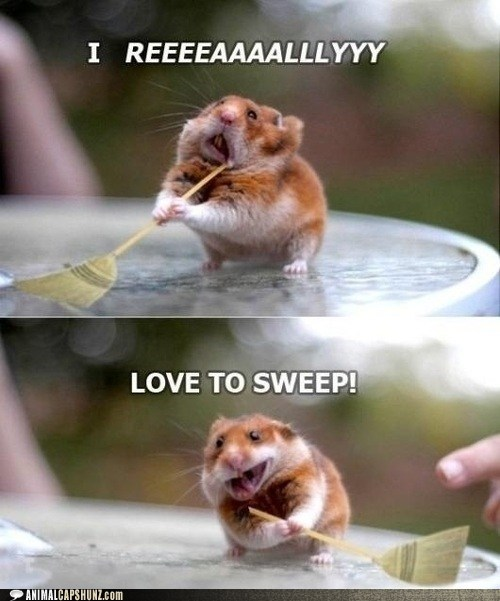 broom brooms captions hamster hamsters love multipanel photoshop really smile sweep sweeping - 6391182336