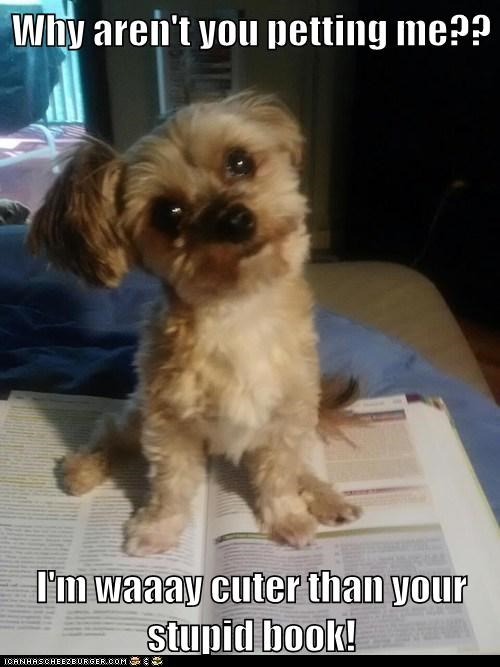 book cuter than you dogs pet me what breed - 6391222528
