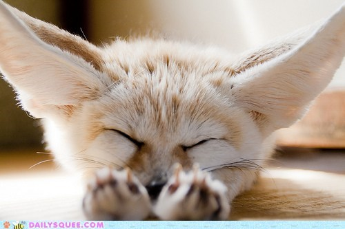 ears fennec fox nap squee spree stretching - 6391395072