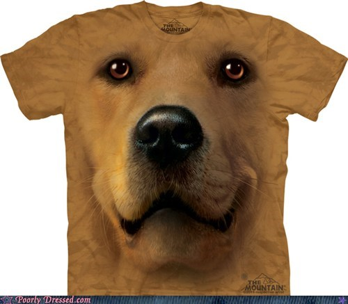 dogs kitschy novelty shirt yes this is dog - 6391542528