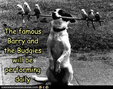 The famous Barry and the Budgies will be performing daily