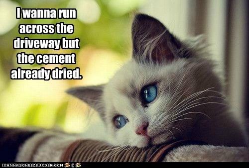 cat cement driveway First World Prob First World Problems vomit - 6391647488