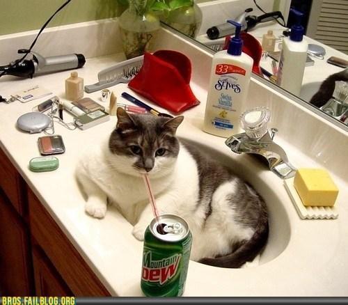 animals cat dew manimals sink - 6391673088
