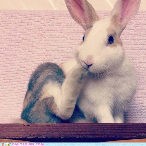 bunny feet nom nom pet rabbit reader squee - 6391893760