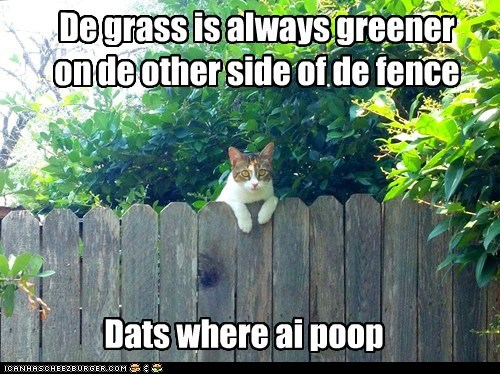 captions,Cats,fence,grass is greener,green,lolcats,poop,pooping,potty,sayings
