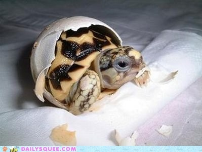 egg shell turtle newborn squee hatching - 6392034816