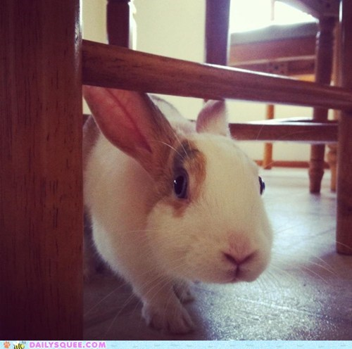 bunny,happy bunday,pet,rabbit,reader squee
